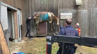 Fünf Kühe aus Güllenloch gerettet