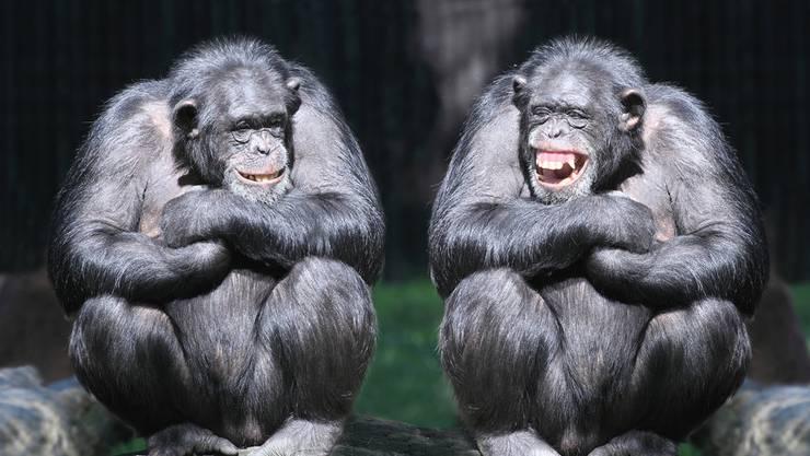 Pascal Hollenstein: «Mit einem Ja zur Affen-Initiative würde die klare rechtliche Trennung zwischen Menschen und Tieren zum ersten Mal in der Geschichte unseres Landes in Frage gestellt.» (Archivbild)