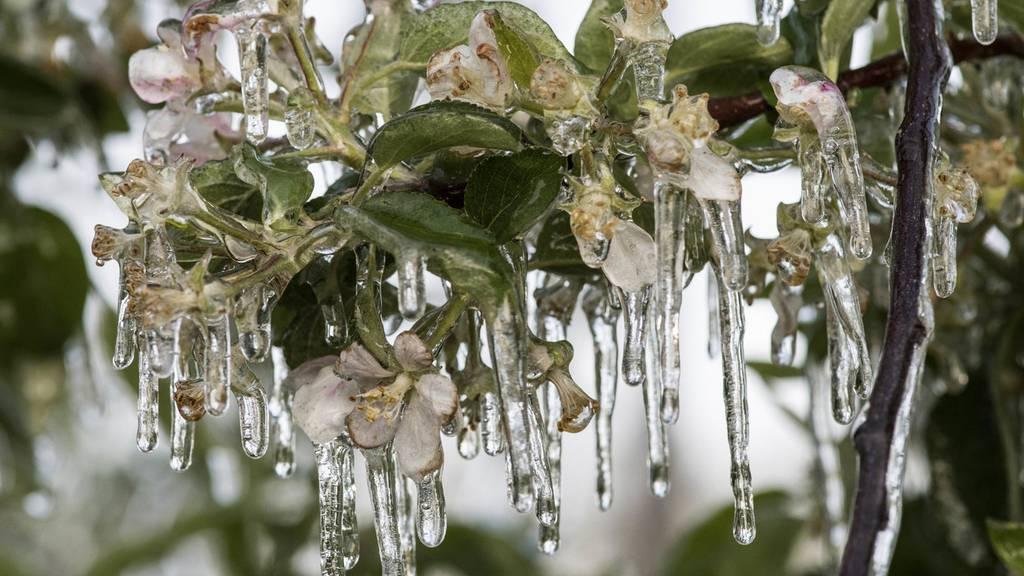 Bauern wegen Kälte im Dauereinsatz