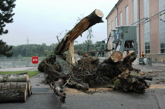 Angeschwemmtes Holz beim Kraftwerk Klingnau