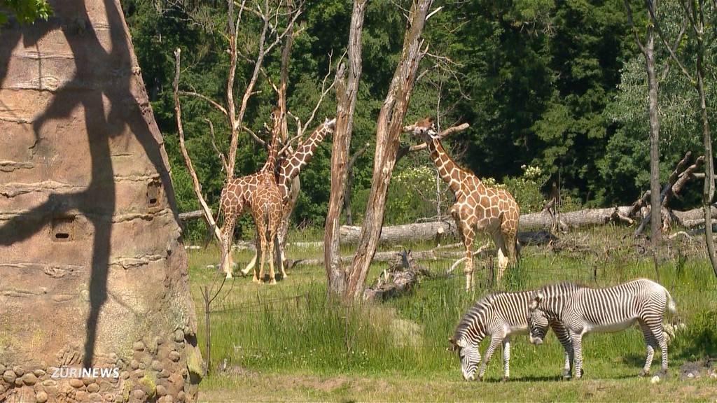 Zoos und Campingplätze dürfen bald wieder öffnen