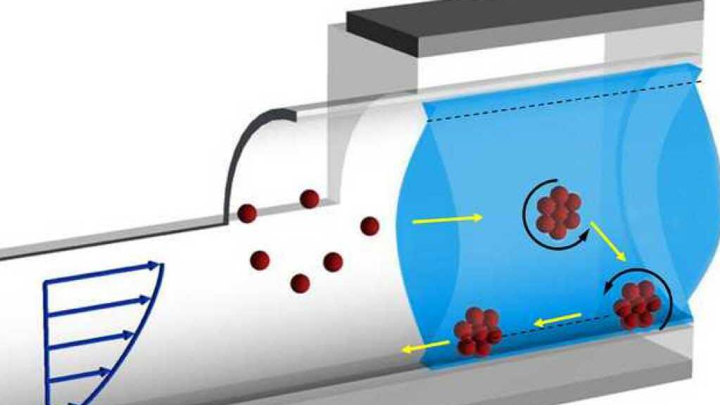 Aggregierte Mikrokügelchen (rot), die zum Beispiel durch die Blutbahn Krebsmedikamente zu einem Tumor bringen sollen, können sich an einer Gefässwand entgegen der Fliessrichtung bewegen. (Pressebild ETH)