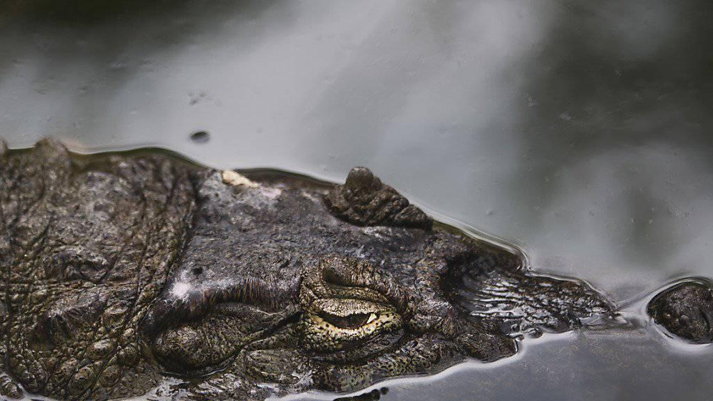 War es ein Krokodil? Fischer im australischen Queensland tot aufgefunden. (Symbolbild)