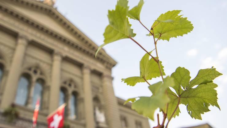 Die Grünen sind in 80 Gemeinden der Schweiz die stärkste Partei. 2015 waren sie es in nur sechs Gemeinden. (Archivbild)