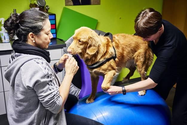 Weitere Impressionen von der Physiotherapiesitzung mit Hund Taavo.