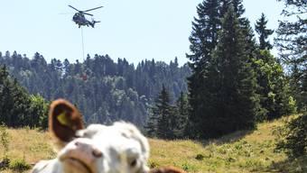 Hilfe von oben für durstige Kühe: Die Schweizer Armee versorgt im Kanton Waadt mehrere Alpen mit Wasser. Auch Freiburg bittet um solche Hilfe.