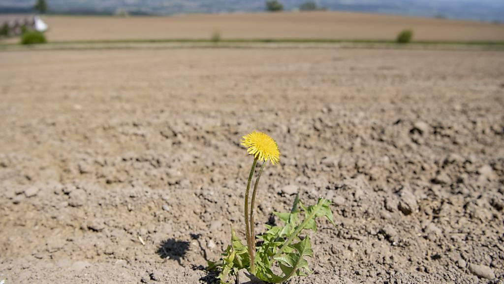 Die Klimakrise hat viele Folgen. (Archivbild)