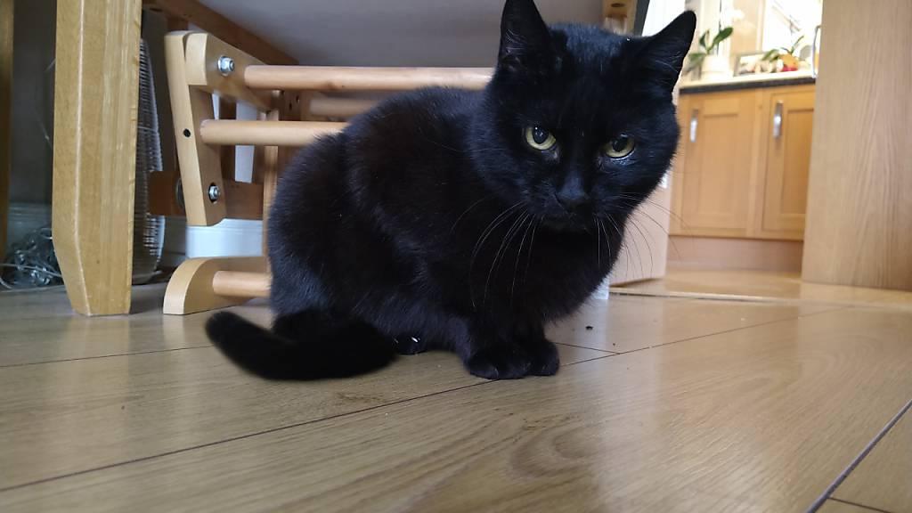 Familie freut sich nach vier Jahren über Rückkehr von Katze Bella