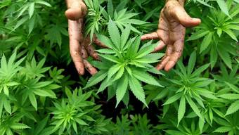 Der Finanzspekulant George Soros spendet eine Million Dollar für die Legalisierung von Marihuana (Archiv)