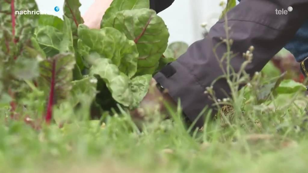 Bio Landwirtschaft boomt: Projekt «Randebandi»