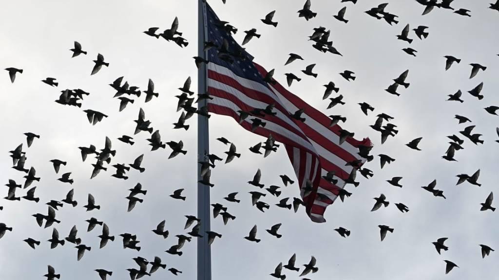 Vögel fliegen an einer US-Flagge vorbei, die über dem Old Executive Office Building auf dem Gelände des Weißen Hauses in Washington weht. Bei einem Treffen am Wochenende hat sich die US-Delegation zu ersten Gesprächen mit den Taliban getroffen. Foto: Susan Walsh/AP/dpa