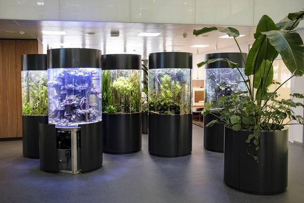 Die Fischaquarien im Eingangsbereich