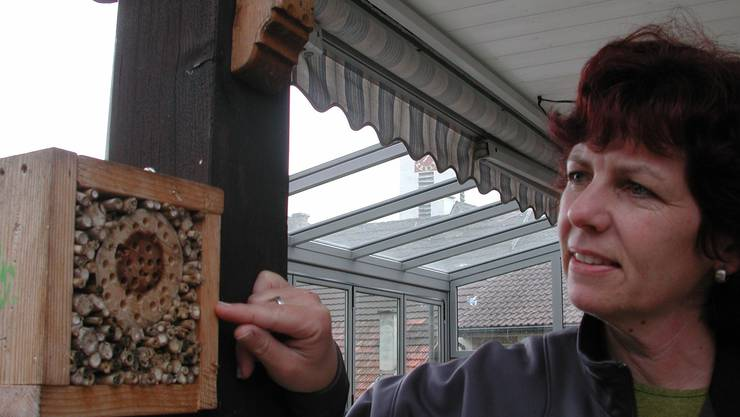 Andrea Wunderlin kann aus nächster Nähe beobachten, wie sich Wildwespen und -bienen um ihren Nachwuchs kümmern.