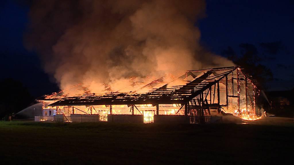 Heldswil (TG): Scheune brennt komplett nieder - Drei Kühe verletzt