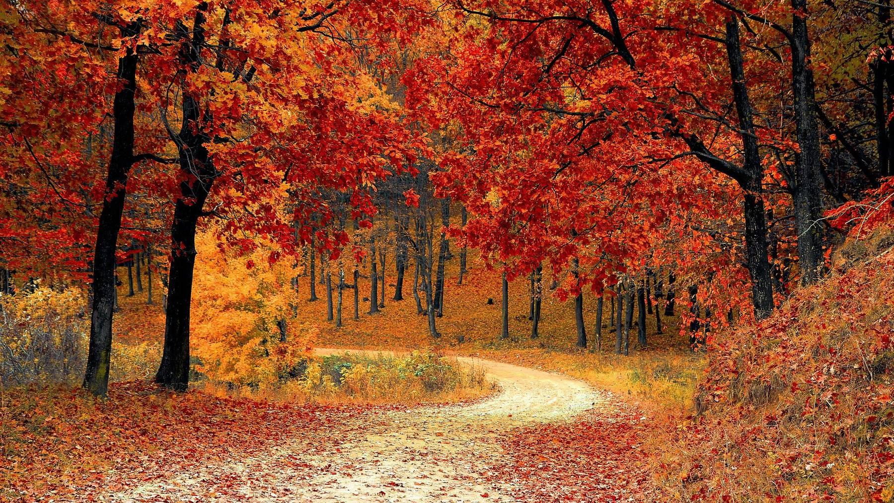 Der Herbst steht vor der Türe.