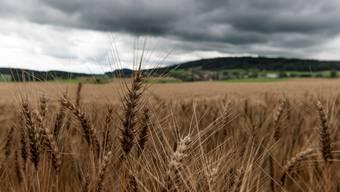 Die Landwirtschaft ist für den Klimawandel mitverantwortlich. Wie stark, ist umstritten.