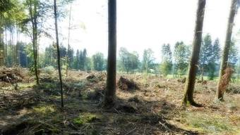 Im Neuban hat Sturm Burglind ganze Flächen abrasiert.