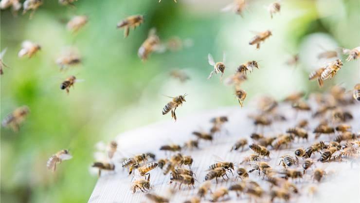 Viele Bauern sind sich bewusst, wie wichtig die Bienen für die Landwirtschaft sind. az/archiv