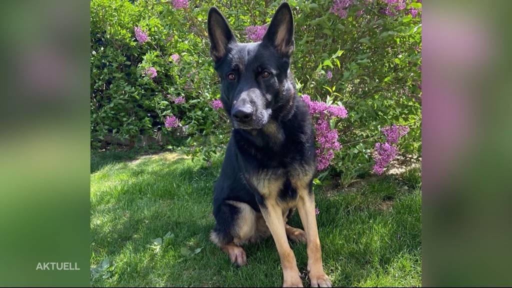 Polizeihund Basco hilft zwei Einbrecher zu fassen