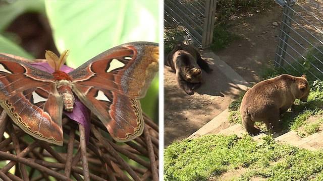 Filigrane Insekten / Zu Besuch bei den Bären