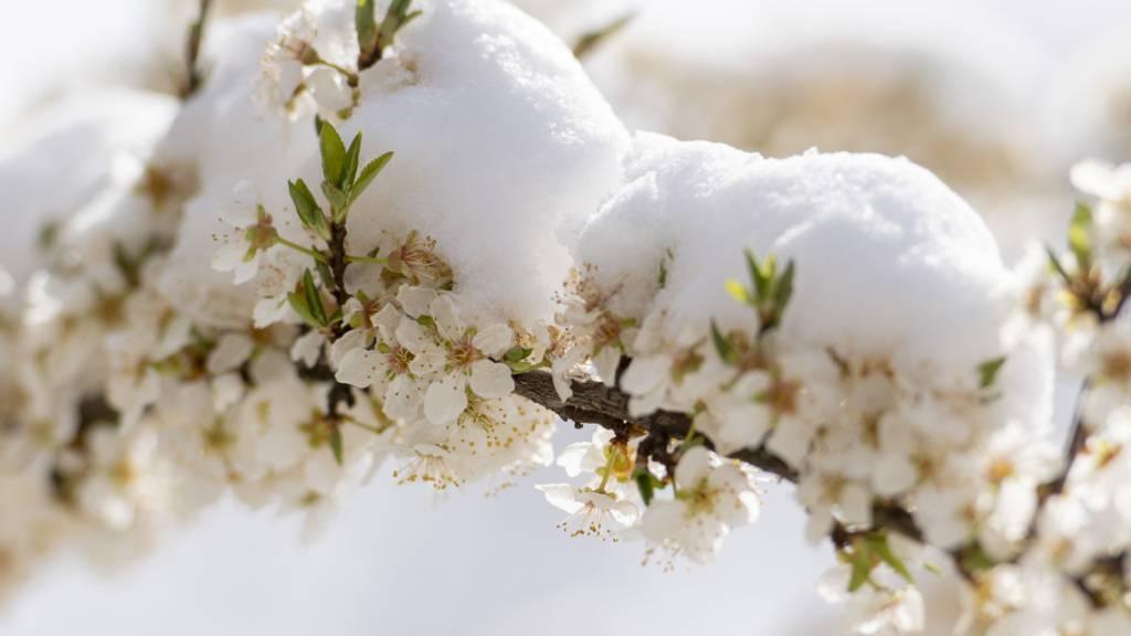 In den Schweizer Voralpen gab es in der Nacht auf Sonntag wieder Schnee. (Archivbild)