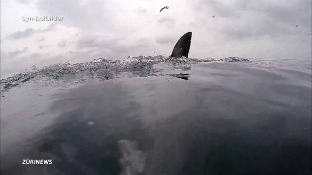 Schweizer schlägt Hai in die Flucht