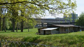 Hier sollen bald Feuerstellen, Spielwiesen, WCs und eine Wasserzapfsäule zum Verweilen einladen. Dafür muss aber erst die Tierauffangstation entfernt werden.