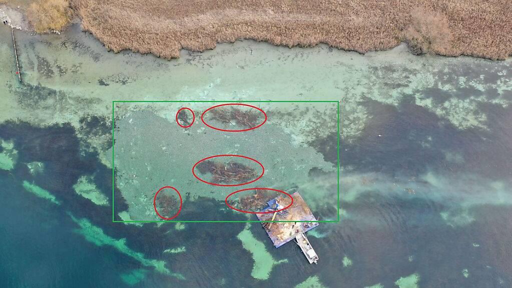 Drohnenaufnahme von der Testfläche bei Gottlieben. Es wurden 300 Kubikmeter Kies (grüne Fläche) aufgeschüttet, um Fischen im Seerhein eine strukturreiche Lebensgrundlage zu schaffen.