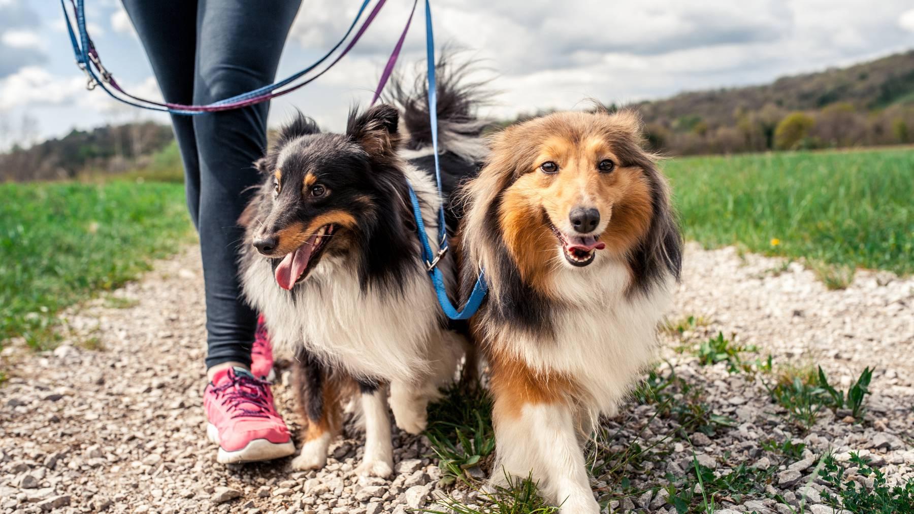 93 Hundehalterinnen und Hundehalter haben gegen diie Bestimmung der Stadt Wil eine Beschwerde erhoben.