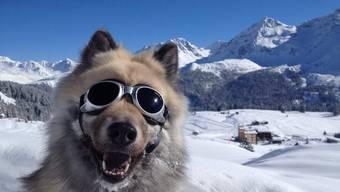 Hunde könen Artgenossen von anderen Spezies unterscheiden, dies das Fazit einer französischen Studie (Symbolbild)