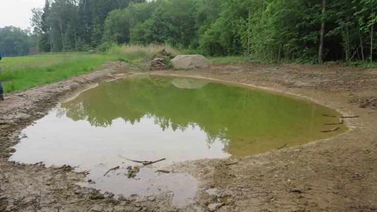 Der frisch erneuerte Teich im Wohler Chintis, dahinter der noch überwachsene zweite Teich.