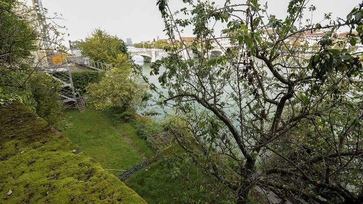 Die Terrassen des Gartens am Rheinsprung liegen seit Jahren brach. Die Mauern sind vermoost und die Bäume machen einen traurigen Eindruck. Das wird sich bald ändern. Martin Töngi