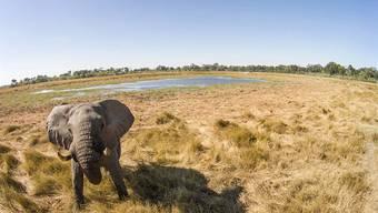 Drohnen können nicht nur Elefanten ausmachen, wie hier in Botswana, sondern natürlich auch Wilderer.