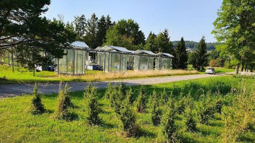 Forscher testen Früherkennung gefährlicher Baumschädlinge