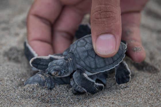 Mehr als eine Million Arten gelten laut der Roten Liste der Weltnaturschutzorganisation IUCN als vom Aussterben bedroht. Bild: Shutterstock