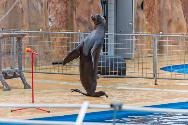 Die Seehunde-Show bleibt dem Connyland noch erhalten (3)