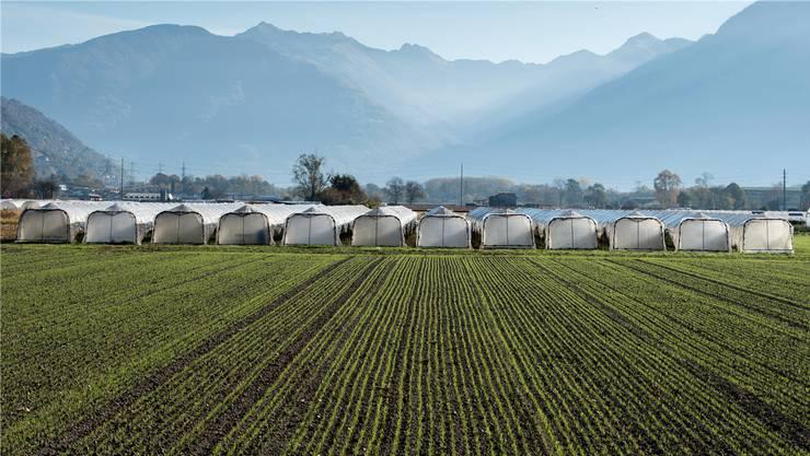 Zankapfel Gewächshäuser (auf diesem Bild in der Magadino-Ebene im Tessin): Wo sollen Bauern sie künftig noch bauen dürfen?