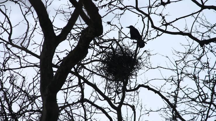 Eines der Nester