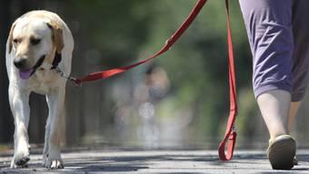 Nach nicht bezahlter Hundetaxe erhielt das Ehepaar eine Busse – auch diese wurde nicht bezahlt. Nun wurden sie vor Gericht beordert.