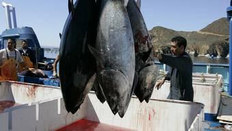 Der mexikanische Thunfischfang wurde jahrelang von den Händlern boykottiert, da auch Delfine verenden.