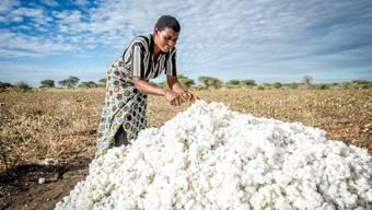 Baumwoll-Ernte in Meatu. Mehr als 90 Prozent der Bewohner in der Region leben von der Landwirtschaft. Remo Naegeli.jpg