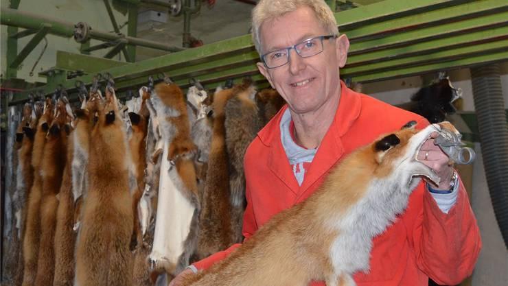 Kurt Friderich mit Fuchsfellen, die aus Aargauer oder Innerschweizer Jagd stammen.