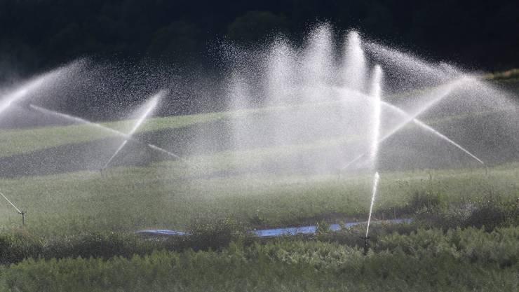 Die intensive Nutzung von Flusswasser zu landwirtschaftlichen Zwecken wird im Kanton Solothurn momentan noch nicht beschränkt.