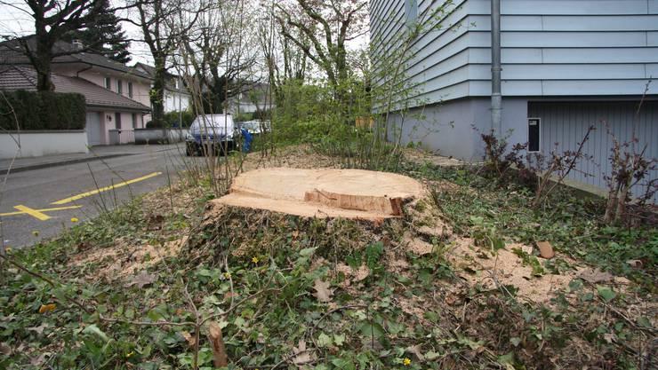 Der Baum wurde ohne Bewilligung gefällt.