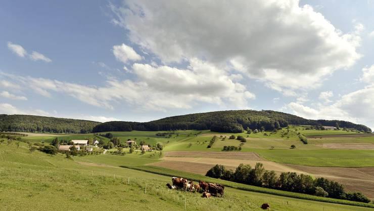 Bis zum Abschluss des Verfahrens zur kantonalen Kulturlandinitiative vor Bundesgericht dürfen im Kanton Zürich keine Gebiete in Bauland umgezont werden. (Symbolbild).