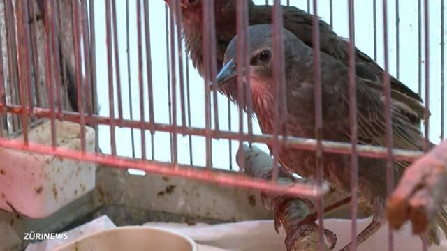 Falsche Hilfe tötet Jungvögel
