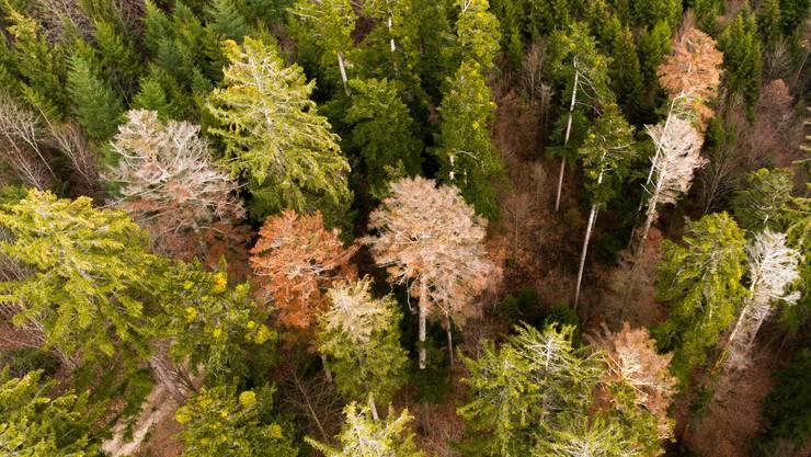 Waldschäden (Archivbild)