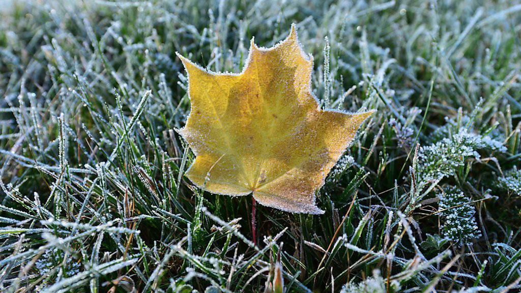 Erstmals in diesem meteorologischen Herbst ist im Flachland Bodenfrost aufgetreten. (Archivbild)