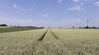 Wie gesund sind die Schweizer Böden und welche sind für den Ackerbau geeignet? Eine neue Bodeninformationsplattform soll unter anderem diese Fragen beantworten, wie Forschende vorschlagen. (Archivbild)