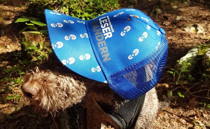 Klare Siegerin heute: Lagotto-Hündin Lucy ganz chic mit Leserwandern-Hut. Der Plausch war nur von kurzer Dauer – die Lust aufs kühle Augstbach-Wasser zog den Vierbeiner ganz schnell wieder weg von unserer Kamera.